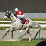 2歳戦が早くも開始!注目の2019新種牡馬はかわいいゴールドシップとクラグオーだ!【馬楽園的コラム】