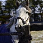 新種牡馬ラニの子どもたちが誕生!初年度産駒の将来の活躍に大いに期待しよう!【馬楽園的コラム】